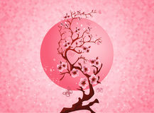 Cherry blossom spring nature scene Stock Images