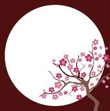 Cherry blossom in spring time Royalty Free Stock Photography