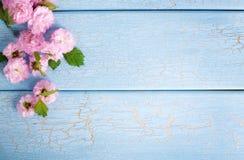 Cherry blossom, springtime Royalty Free Stock Images
