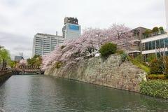 CHERRY BLOSSOM  AT  SUMPU CASTLE IN SHIZUOKA CITY, Japan Royalty Free Stock Photos
