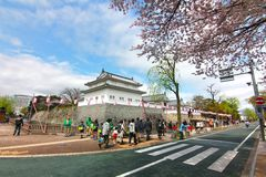 CHERRY BLOSSOM  AT  SUMPU CASTLE IN SHIZUOKA CITY, Japan Stock Images