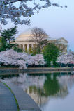 Cherry Blossom at sunrise royalty free stock images