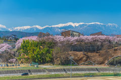 Cherry Blossom in Takato stockbild