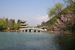 A cherry blossom takes right of picture from a stone bridge and temple pavilion on Black Dragon Pool Royalty Free Stock Images