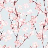 Cherry Blossom Teste padrão floral sem emenda 5 da aquarela Fotografia de Stock Royalty Free