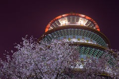 Cherry blossom and Tianyuan Palace. A cherry blossom is the flower of any of several trees of genus Prunus, particularly the Japanese Cherry, Prunus serrulata royalty free stock images