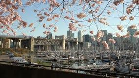 Cherry Blossom-Transportwagen, Vancouver-Jachthafen stock video footage