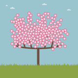Cherry blossom tree. Landscape background with cherry blossom tree Royalty Free Stock Images
