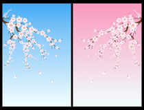 Cherry blossom tree. Set of two backgrounds with cherry blossom tree.EPS file available vector illustration