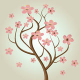 Cherry blossom tree. Cherry blossoms illustration in asian style.  illustration Royalty Free Stock Photography