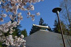 Cherry Blossom Tree Lizenzfreie Stockbilder