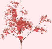 Cherry Blossom Tree. In a Pink Background stock illustration
