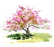 Cherry Blossom Tree Fotografie Stock