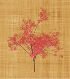 Cherry Blossom Tree. In a Parchment Background Royalty Free Stock Images