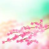 Cherry Blossom Tree Branch Fotografía de archivo