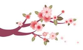 Cherry blossom tree branch artwork Royalty Free Stock Photos