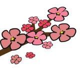 Cherry Blossom tree branch  illustrator. Cherry Blossom tree branch  illustration with pink 5 petals  on white background Royalty Free Stock Photos