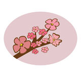 Cherry Blossom tree branch pink tone illustration vector Stock Photography