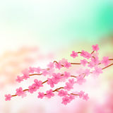 Cherry Blossom Tree Branch. Vector illustration Stock Photography