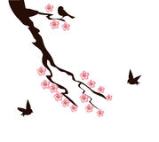Cherry Blossom Tree Branch. Vector illustration of cherry blossom branch with birds Royalty Free Stock Images