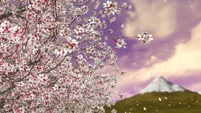 Cherry blossom tree falling petals and Mt Fuji. Close-up of sakura cherry tree in full blossom and flower petals falling in slow motion against Mt Fuji and stock video footage