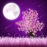 Cherry Blossom tree. In front of the full Moon Stock Images