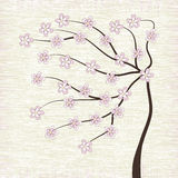 Cherry blossom tree illustration  Royalty Free Stock Photography