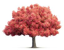 Tree isolated 3D illustration Royalty Free Stock Image