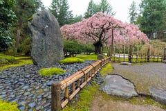 Cherry Blossom Tree por la roca natural Imágenes de archivo libres de regalías
