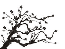 Cherry blossom tree silhouette. The silhouette of cherry blossom tree on white background Royalty Free Stock Photos