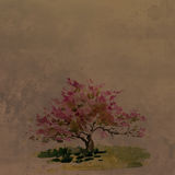 Cherry blossom tree at vintage background. Cherry blossom tree drawing by watercolor at vintage background, aquarelle sketch of blooming apple tree, painting Royalty Free Stock Photo