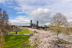 Cherry Blossom Tree at Waterfront Park Royalty Free Stock Images