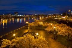 Cherry Blossom Trees au parc de bord de mer de Portland pendant Hou bleu Image libre de droits