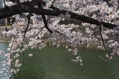 Cherry Blossom Trees entlang einer Niederlassung des der Biwa-See Kanals in Okazaki-Bereich in Kyoto lizenzfreie stockfotos