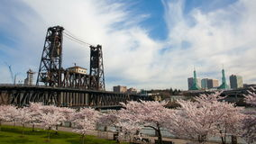 Cherry Blossom Trees Spring in Portland Oregon. Flowering Cherry Blossom Trees Spring Season along Willamette River Waterfront in Portland Oregon 1920x1080 stock footage
