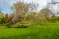 Cherry Blossom trees. Well maintained garder with colorful flowers, green grass and cherry blossom trees Royalty Free Stock Images