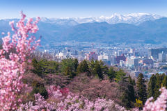 Cherry-blossom trees & x28;Sakura& x29; and many kinds of flowers in Hanam Royalty Free Stock Photo