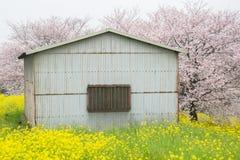 Cherry blossom tunnel and fields of yellow flowering nanohana at Kumagaya Arakawa Ryokuchi Park in Kumagaya,Saitama,Japan.Also kno. Kumagaya Arakawa Ryokuchi Royalty Free Stock Photography