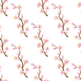 Cherry blossom twig -Seamless pattern Royalty Free Stock Images