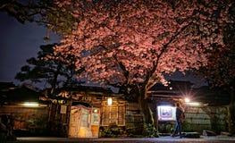 Cherry Blossom u. x28; Sakura& x29; Stockfoto