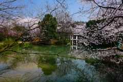 Free Cherry Blossom Valley,wuxi,china Royalty Free Stock Photo - 113346615
