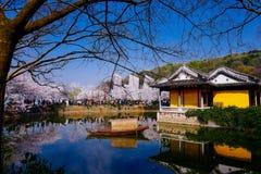 Free Cherry Blossom Valley,wuxi,china Stock Photography - 113355592