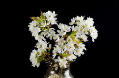 Cherry Blossom in a Vase Royalty Free Stock Photos