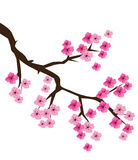 Cherry Blossom Vector Stock Images