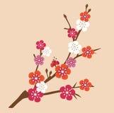 Cherry  blossom vector illustration Royalty Free Stock Photography