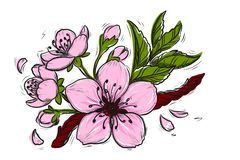 Cherry Blossom Vector Lineart Illustration. Sakura Spring hand drawn Sketch for seasonal promo, sale, romantic greeting card, stock illustration