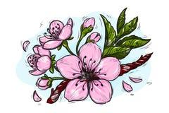 Cherry Blossom Vector Lineart Illustration. Sakura Spring hand drawn Sketch for seasonal promo, sale, romantic greeting card, royalty free illustration
