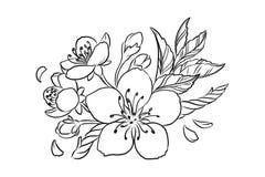 Cherry Blossom Vector Lineart Illustration. Sakura Spring hand drawn Sketch for seasonal promo, sale, romantic greeting card, vector illustration