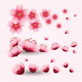 Cherry blossom vector. Oriental painting style, cherry blossom in spring time vector illustration stock illustration