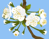 Cherry Blossom Vetora Illustration Fotografia de Stock Royalty Free